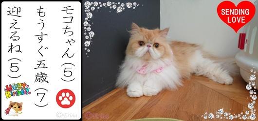 2連結赤ハートⒸErina猫川柳イラスト付きモコちゃんもうすぐ五歳迎えるね.jpg
