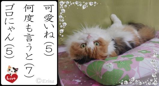 7月#1猫川柳ⒸErina可愛いね何度も言うとゴロにゃんとレナ.jpg