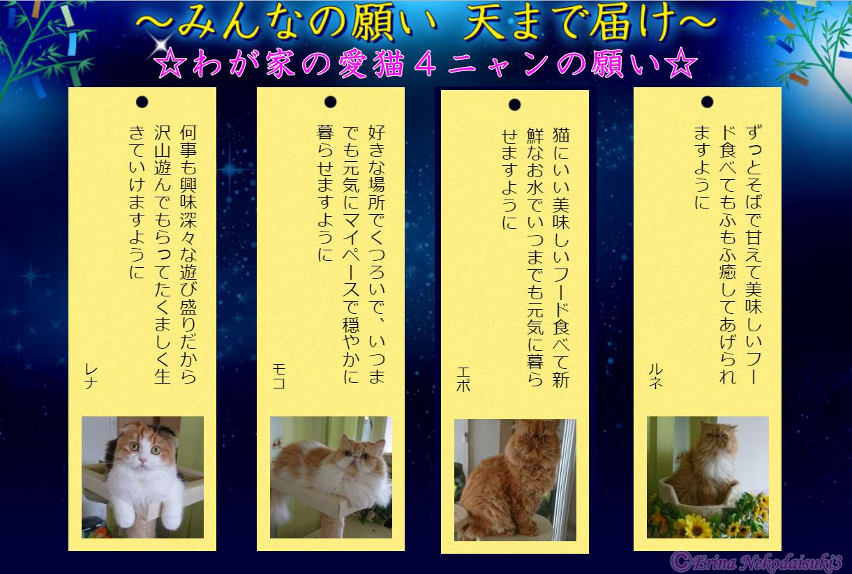 Ⓒわが家の4ニャン短冊3つめPEPPY星まで届け大作戦2018-7-10.PNG
