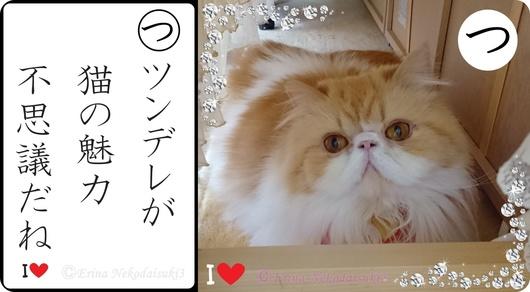 Ⓒツンデレが猫の魅力不思議だね-side.jpg