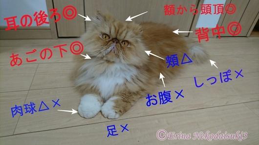 Ⓒパーツ名称とルネちゃん全体写真.JPG