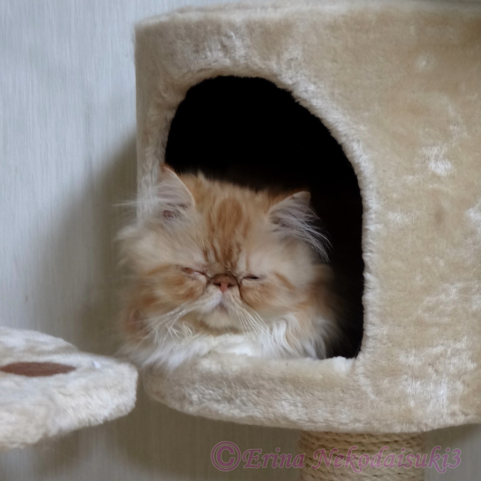 Ⓒルネの子猫時代.jpg