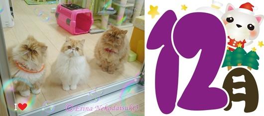 Ⓒ猫3匹12月猫川柳用-side.JPG
