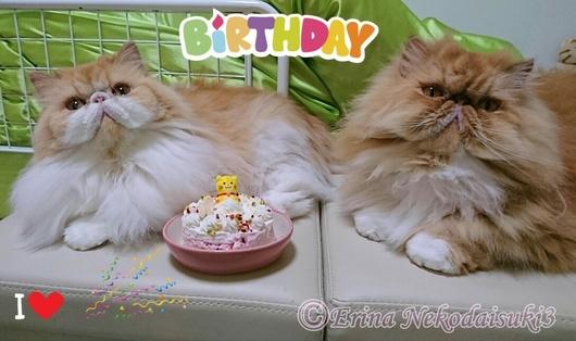 Ⓒ誕生日お祝いモコとルネとケーキ.JPG