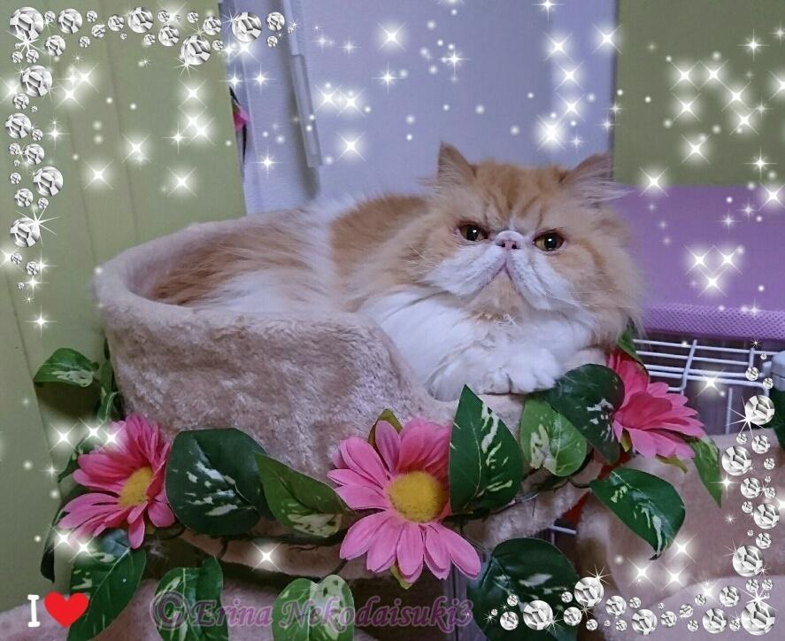 Ⓒ飾り枠付きモコちゃんカップ好き2018-1月.jpg