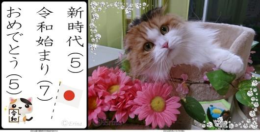 ⒸErina2連結猫川柳新時代令和始まりおめでとうとレナちゃんピンクのお花カップ.jpg
