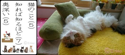 ⒸErina猫川柳「猫のこと知れば知るほど奥深い」とレナのへそ天とでんぐり返り拡大版.jpg
