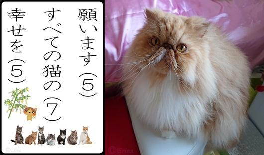 ⒸErina願います全ての猫の幸せをとルネちゃん.jpg
