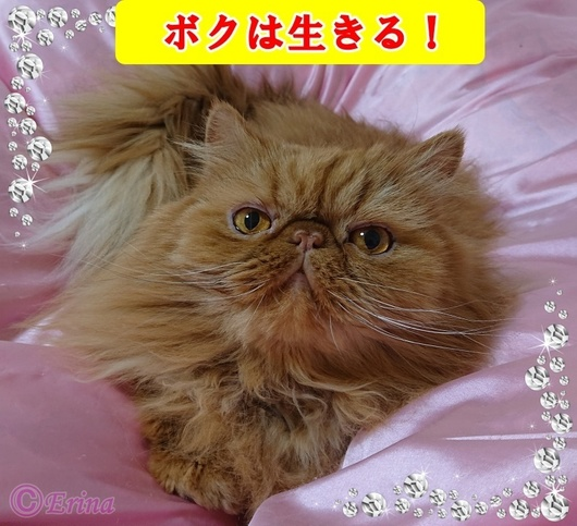 ⒸErinaWP用ボクは生きる可愛いエポちゃん2020-2-4.JPG