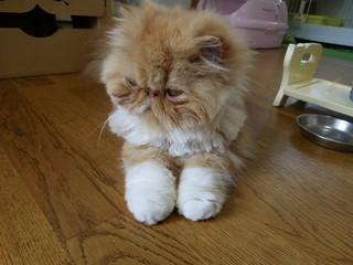 くつした猫.JPG