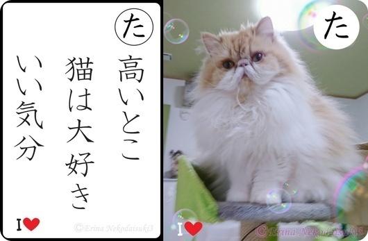 た行モコ高いとこ猫は大好きいい気分.jpg