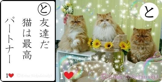 と行友達だ猫は最高パートナー.jpg