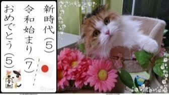 スマホ用ⒸErina2連結猫川柳新時代令和始まりおめでとうとレナちゃんピンクのお花カップ.jpg