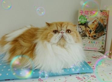 モコお座りと子猫マニアックス表紙本.JPG
