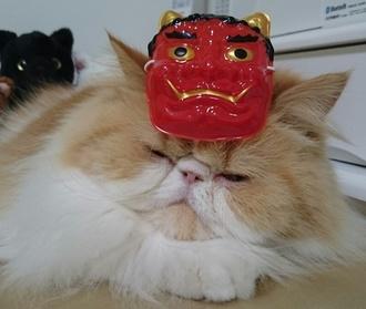 モコお面のせ猫.JPG