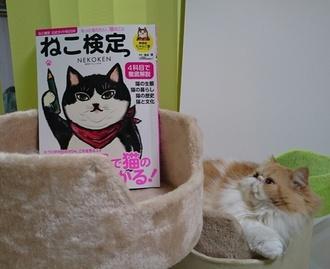 モコとねこ検の本17129.JPG