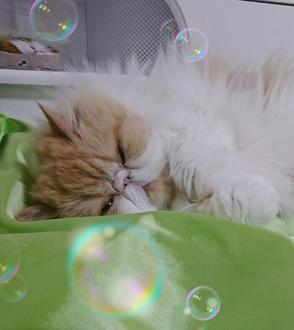 モコと寝る17326.JPG