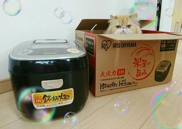 モコと炊飯器.JPG