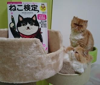 モコねこ検本見るルネも2017126.JPG