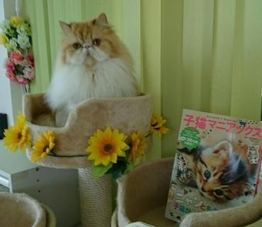 モコカップからこっち見る子猫マニアックスあり.JPG