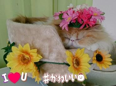 モコカップ眠り可愛いのせ猫.jpg