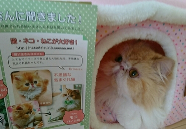 モコ子猫マニアックスページ見るハウスから.JPG