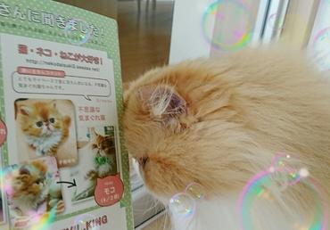 モコ子猫マニアックス御礼する姿.JPG