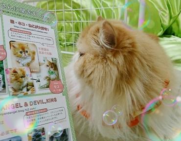 モコ子猫マニアックス掲載ページ見る.JPG