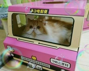 モコ宅急便2017-5-6右サイドバー.JPG