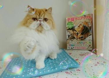 モコ窓側お手手あげながら子猫マニアックス本表紙と.JPG