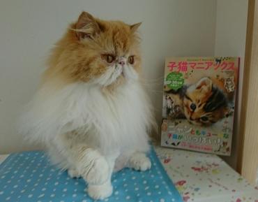 モコ窓側と子猫マニアクス表紙本.JPG