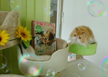モコ緑カップから「子猫マニアックス見る」.JPG