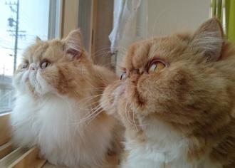ルネとモコ窓見る17225.JPG