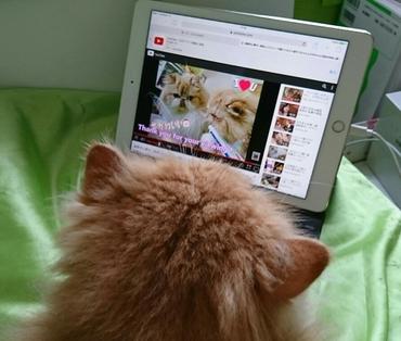 ルネモコとの歯磨き動画見る.JPG