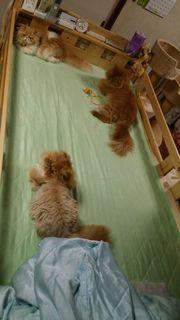 三匹のネコ.jpg