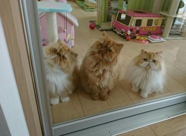 三匹揃てガラス扉に.JPG