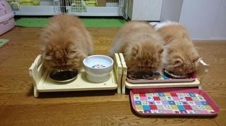 三匹食事中0924の2.JPG