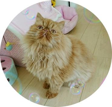 円形エポピンクのお家そば2017-7-29.JPG