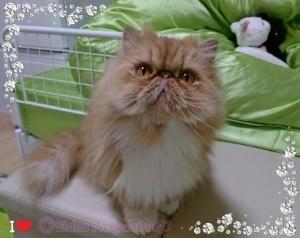 幅300右サイドバー用Ⓒ②飾り枠付き可愛いルネちゃんの表情.JPG