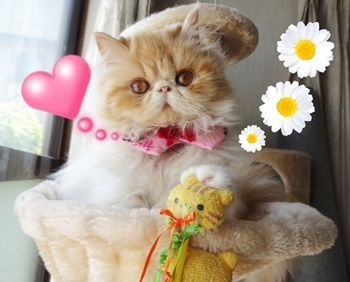 幅300モコハンモックと黄色ねこじゃらし輝き加工オブジェクト入りお花とハート.JPG