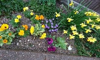 庭の花17326.JPG