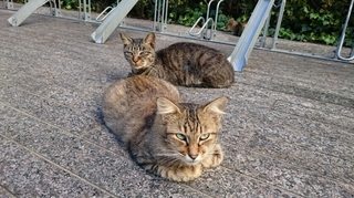 栄の猫ちゃん達1003.JPG