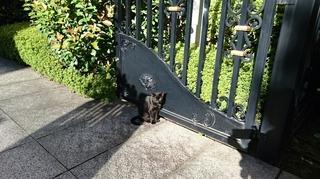 栄黒猫1003の1.JPG