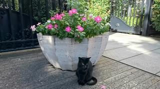 栄黒猫1003の2.JPG