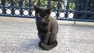 栄黒猫1003の3.JPG