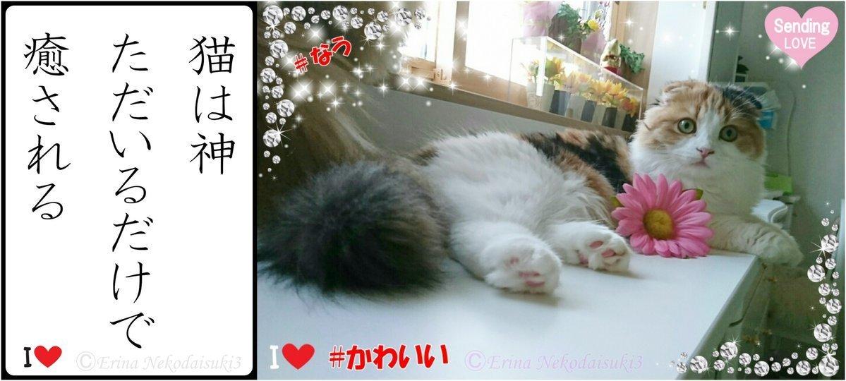猫は神ただいるだけで癒されるレナ.jpg