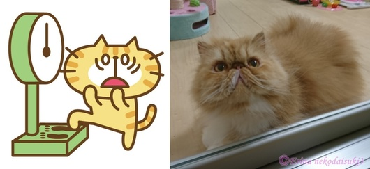 猫体重イラスト&ルネちゃん.jpg