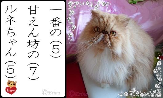 猫川柳#2ⒸErina一番の甘えん坊のルネちゃんとルネ.jpg