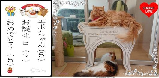 猫川柳とエポ&レナ②7歳エポちゃんお誕生日おめでとう2019-4-14.jpg