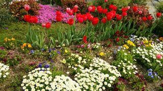 花の写真チューリップ.jpg